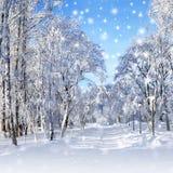 冬天风景,暴风雪 免版税图库摄影