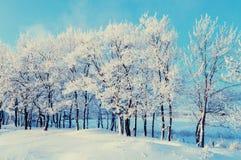 冬天风景-与阳光的冬天美好的自然在冬天森林 库存照片