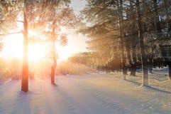 冬天风景-冬天在明亮的晚上阳光下的森林自然与冷淡的树 免版税库存图片