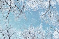 冬天风景-冬天树的冷淡的分支反对蓝天的 33c 1月横向俄国温度ural冬天 免版税库存图片
