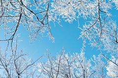 冬天风景-冬天树的冷淡的分支反对蓝天的 33c 1月横向俄国温度ural冬天 库存照片