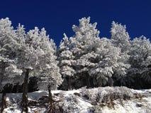 冬天风景结冰的树 免版税库存照片