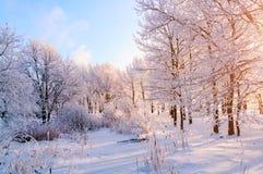 冬天风景-冷淡的树在冬天森林里在晴朗的早晨 与冬天树的冬天风景 免版税库存照片
