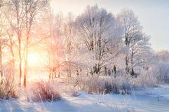 冬天风景-冷淡的树在冬天森林里在晴朗的早晨 与冬天树的冬天风景 图库摄影