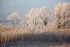 冬天风景-冷淡的树在多雪的森林里在晴朗的早晨 库存图片