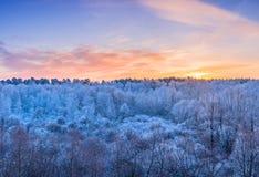 冬天风景-冷淡的树在晴朗的morni的森林里 图库摄影