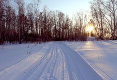 冬天风景-在多雪的森林公路的冷淡的树在一个美妙的冬天森林里 库存照片