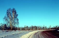 冬天风景-在多雪的森林公路的冷淡的树在一个美妙的冬天森林里 免版税库存照片