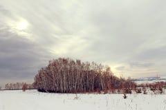 冬天风景-在多雪的森林公路的冷淡的树在一个美妙的冬天森林里 免版税库存图片