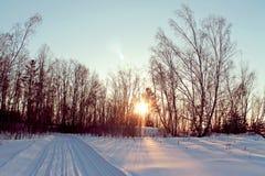 冬天风景-在多雪的森林公路的冷淡的树在一个美妙的冬天森林里 库存图片