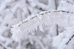 冬天风景-在用雪报道的森林自然的冷淡的树 美好的季节性自然本底 免版税图库摄影