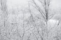 冬天风景-在霜的树 库存照片