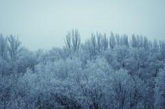 冬天风景-在霜的树 库存图片