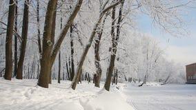 冬天风景-晴朗的天气的积雪的森林 股票视频