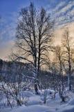 冬天风景 免版税图库摄影