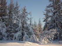 冬天风景 库存照片