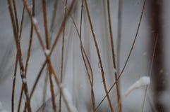 冬天风暴在森林里 免版税库存照片