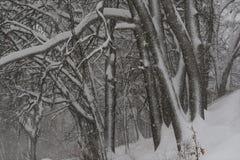 冬天风暴在森林 库存图片