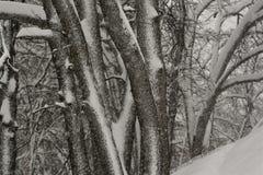 冬天风暴在森林 图库摄影