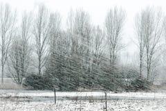 冬天风暴本质上 免版税库存图片