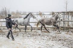 冬天马训练 免版税库存图片