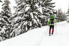 冬天高涨在白色多雪的森林 免版税库存图片