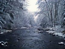 冬天鳟鱼小河 库存图片