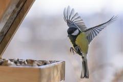 冬天鸟哺养 免版税库存图片