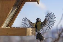 冬天鸟哺养 免版税图库摄影