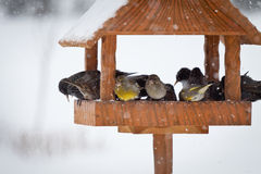 冬天动物 免版税库存图片