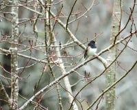 冬天鸟 库存图片