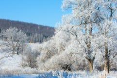冬天,冬天,冬天 免版税库存图片