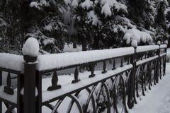 冬天,在篱芭fnd树的雪 库存照片