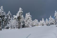 冬天,新年 库存照片