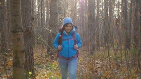 冬天,秋天旅行和远足的概念 步行外面在秋天森林里的年轻徒步旅行者妇女 股票录像