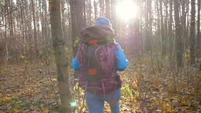 冬天,秋天旅行和远足的概念 高涨妇女的秋天森林 影视素材