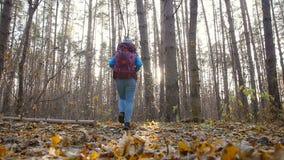 冬天,秋天旅行和远足的概念 高涨妇女的秋天森林 股票录像