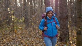 冬天,秋天旅行和远足的概念 高涨妇女的秋天森林 股票视频