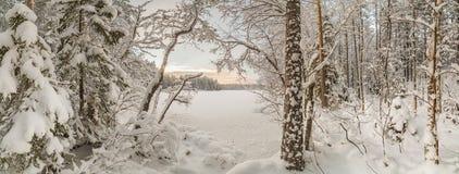 冬天,积雪的森林在一个晴天 33c 1月横向俄国温度ural冬天 免版税库存图片