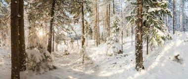 冬天,积雪的森林在一个晴天 33c 1月横向俄国温度ural冬天 图库摄影