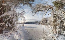 冬天,积雪的森林在一个晴天 33c 1月横向俄国温度ural冬天 库存图片