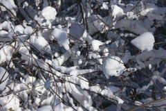 冬天,背景 免版税库存图片
