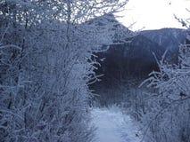 冬天,西伯利亚,雪,路, SLUDYANKA,登上 免版税库存照片