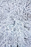 冬天,降雪,用雪报道的树枝,寒冷,雪, n 免版税库存照片