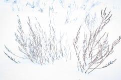 冬天,雪,风景,树,寒冷,森林,树,自然,白色,公园,季节,冰,霜,天空,多雪,蓝色,路,场面,基督 库存照片