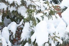 冬天,雪,风景,树,寒冷,森林,树,自然,白色,公园,季节,冰,霜,天空,多雪,蓝色,路,场面,基督 免版税库存照片