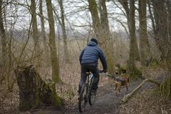 冬天 一个人在有狗的森林骑一辆自行车 库存照片