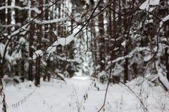冬天结冰的森林和树 库存图片