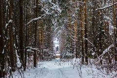 冬天结冰的森林和树 免版税库存图片