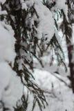 冬天结冰的森林和树 免版税图库摄影